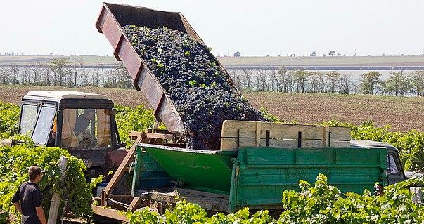 транспортировка и сбор урожая