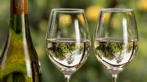 Происхождение отстойного осадка в сусле при производстве белого вина