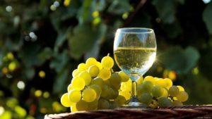 Способы сбора белого винограда - фото 1