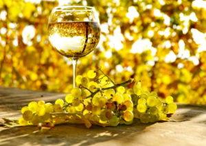 Способы сбора белого винограда - фото 3